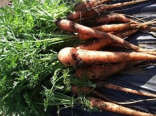 091115_carrot2.jpg