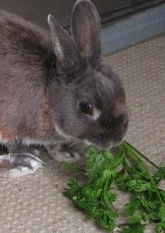 091119_rabbit.jpg