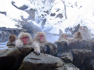 Jigokudani_hotspring_in_Nagano_Japan.jpg